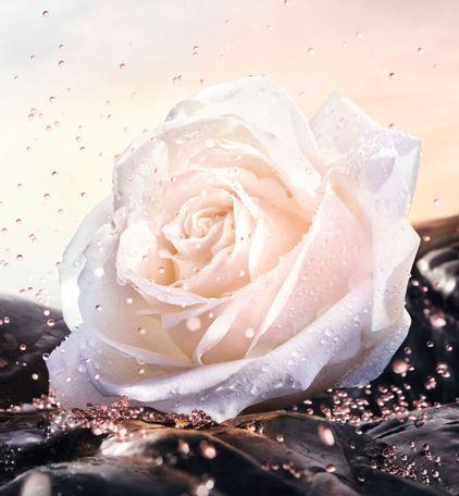 3348901398909_06--thumb02-dior--prestige-le-micro-serum-de-rose-yeux
